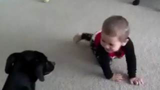 What it's really like to have a child and a dog - Video