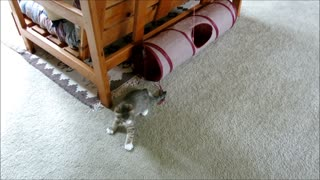 Quirky the Blind Kitten - Plays in the Tube and Hops - Video