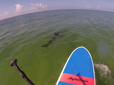 Paddle Boarder Meets Shark !