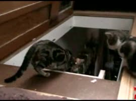 Push other cats cat on the stairs - Video