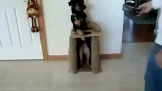 Well Trained Dog Having Its Meal..!! - Video