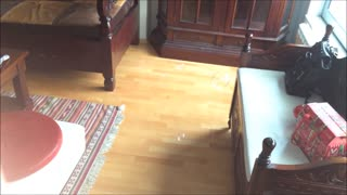 Beagle Puppy Struggles to Catch Bubbles
