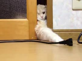 _Cat Tries to Grab Electric Cord_ - Video