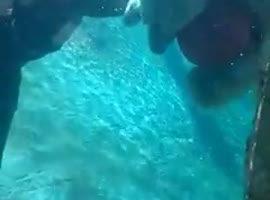 Polar bear plays - Video