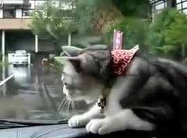 CAT VS. WINDSHIELD WIPERS!