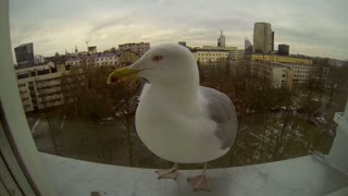 A Seagull's Hospital Drive-Through - Video