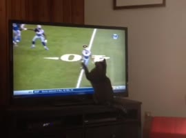 Cat Tries to Catch Football Pass on TV! - Video