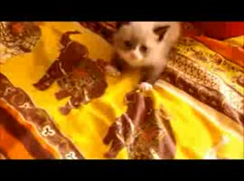 cute little kitten is afraid - Video
