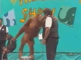 monkey trickster.animals - Video