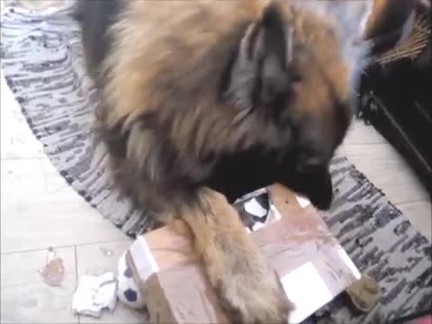A Package For The Dog