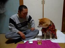 Shiba Inu Prevents Owner from Drinking Alcohol - Video