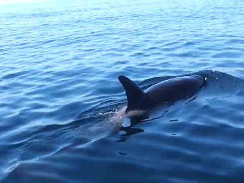 Killer Whales Surround Fishing Boat