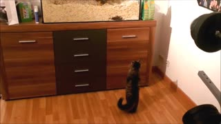 Cat Patiently Stands Like a Human - Video