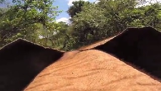 Life Through the Eyes of an Elephant  - Video