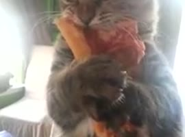 Crazy pizza stealing cat