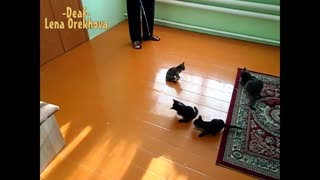 Playful Kitten Slides Around Room
