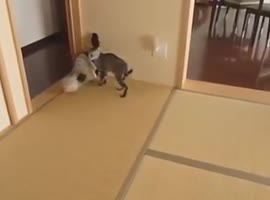 Cat Startles Other Cat !