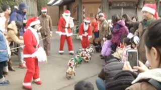 Penguins Take On Santa - Video