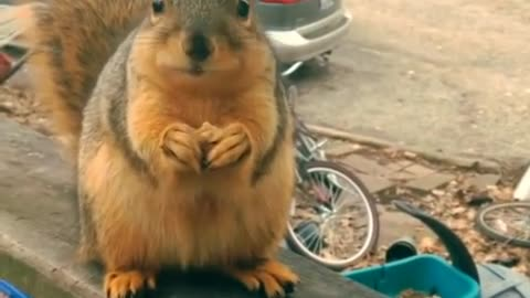 Talking Squirrel Loves Nuts