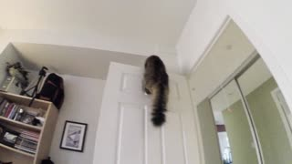Cat Flies to the Top of the Door - Video