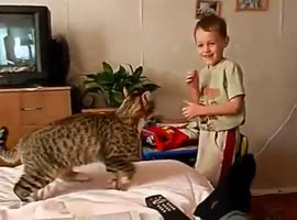cat playing with kid - Video