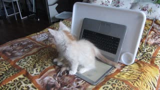 Can not sit on the keyboard! - OK! - Video