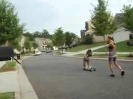 dog ride the tricycle - Video
