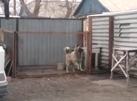 Dog Dancing to Modern Talking - Video