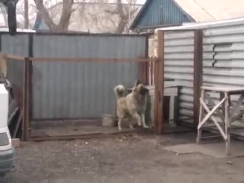 Dog Dancing to Modern Talking