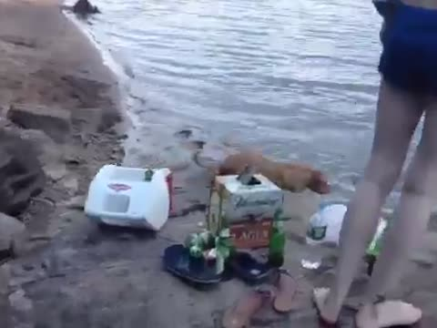 Man's Dog Attempts to Rescue Him After He Jumps Into a Lake