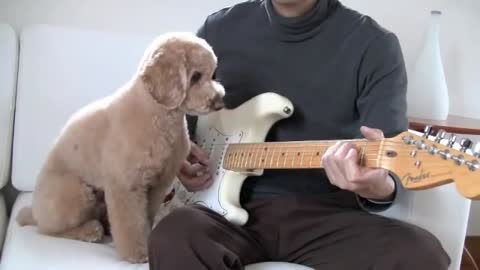 dog wants to play guitar
