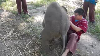 Adorable Baby Elephant Loves Cuddling! - Video