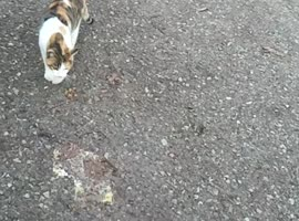 Chi vince tra il gatto e il topo?? Who wins between the cat and the mouse?? - Video