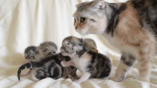 Adorable Kitten Trio Calls Out For Mother! - Video
