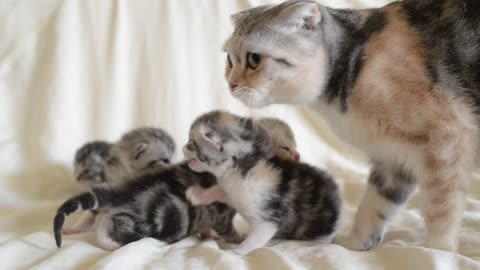 Adorable Kitten Trio Calls Out For Mother!