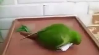 Parrot which change color. - Video