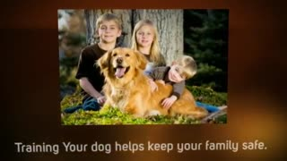 Why Dog Training Is Important - Video