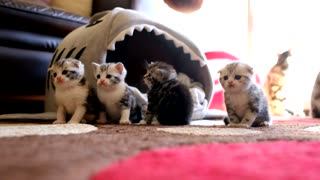 Adorable Kittens Hanging Out! - Video