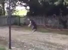dog amazing trick with balloon