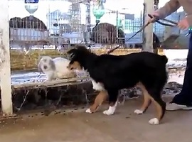 Adorable Bunny Rabbit vs Dog! - Video