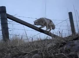 help of a coyote