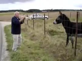 Donkey and doing jazz trumpeter. - Video