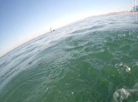 Surfer Encounters Great White Shark! - Video