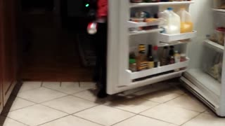 Dog Gets Soda From the Fridge