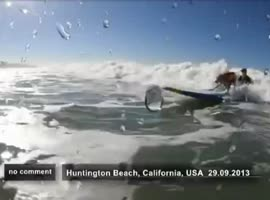 dog - Surfer