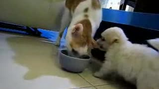 Puppy biting cat ear. - Video