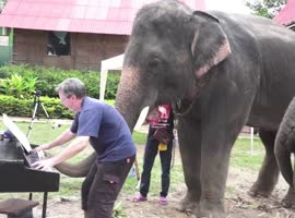 Piano Duet With an Elephant!