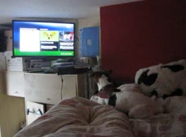 Dog Enjoys Watching TV!