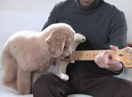 Guitar Playing Dog!