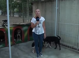 3 dogs circling reporter - Video
